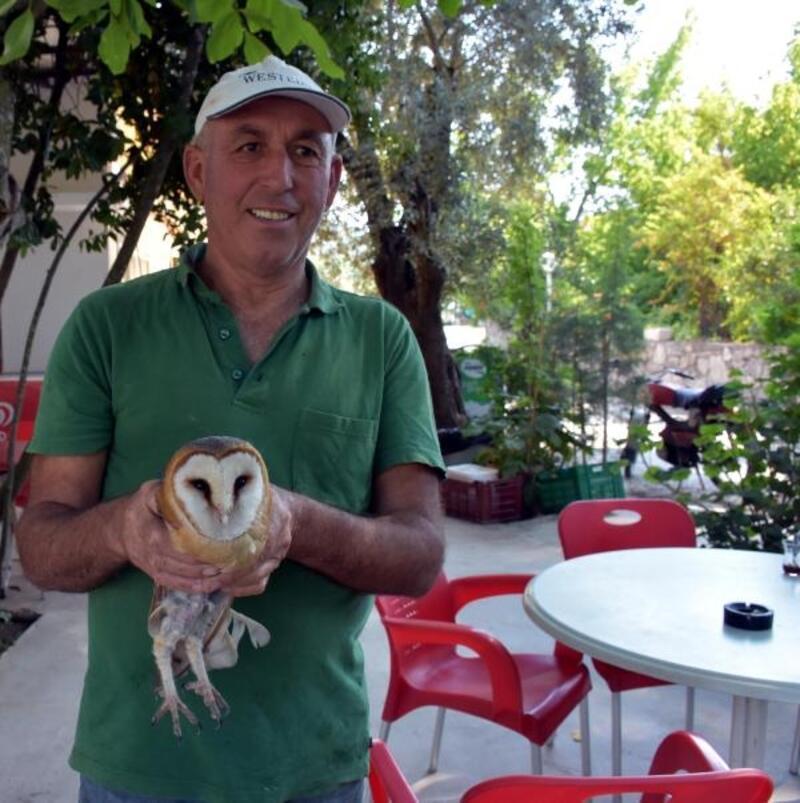 Çalılıklara takılan peçeli baykuşu kurtarıp, doğaya bıraktı