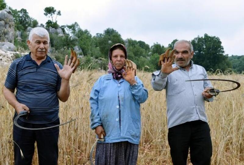 Çiftçiler, sarp arazideki ekinlerini orakla biçiyor