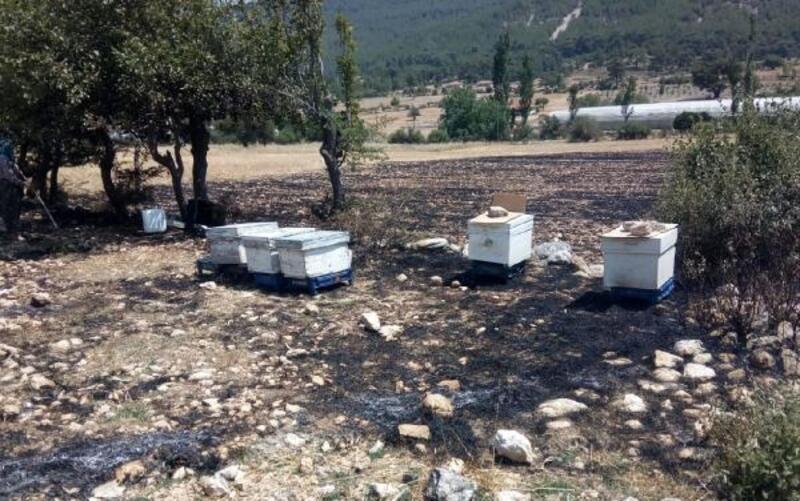 Anız yangınında arı kovanları yandı