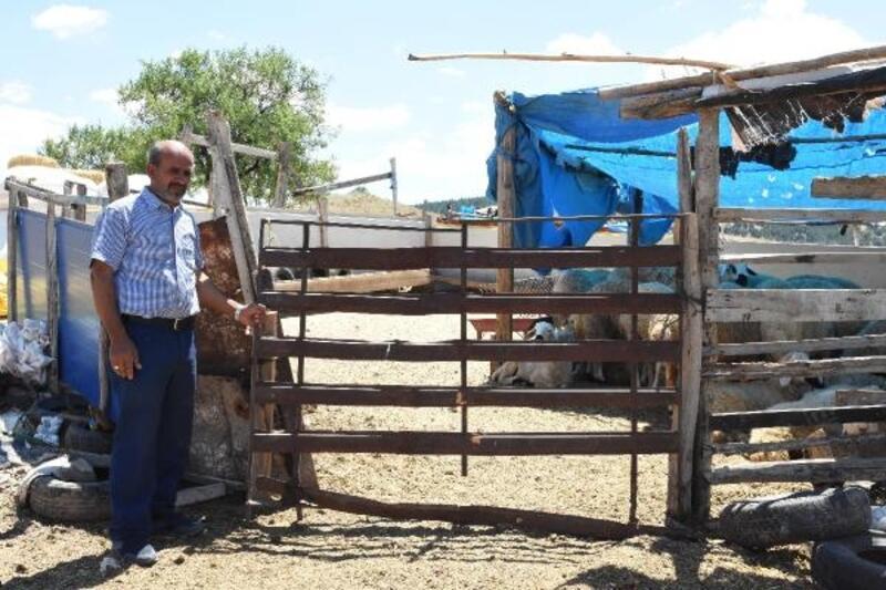 Kırıkkale'de kurbanlık 40 koyun çalındı