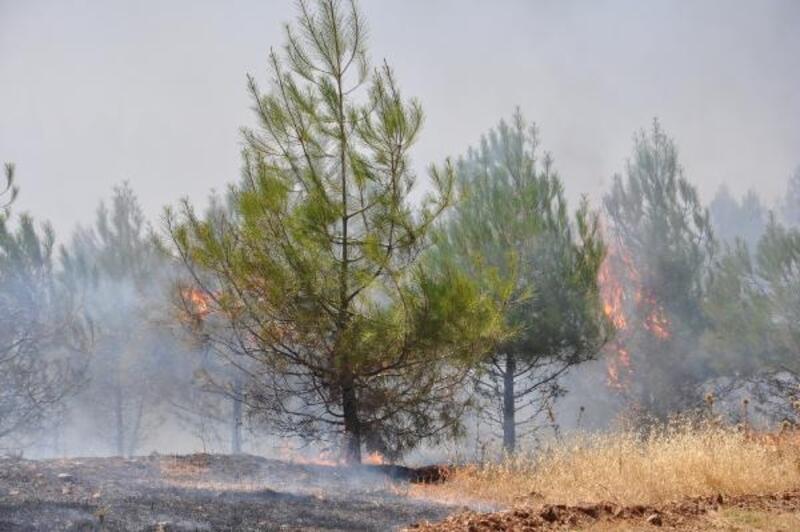Anız yangını ormana sıçradı; 20 hektarlık alan zarar gördü