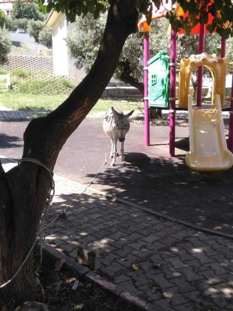 Çocuk parkına terk edilen eşeğe bakım ve tedavi