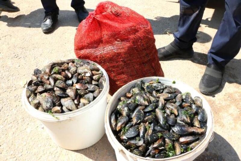 Antalya'da, sağlıksız 1 ton 180 kilo midye dolmaya el konuldu