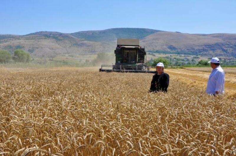 Eskişehir'de, hububat hasadında sona gelindi