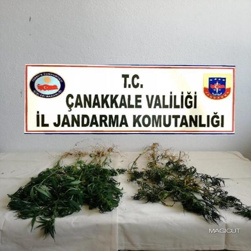 Çanakkale'de uyuşturucu operasyonu: 1 gözaltı