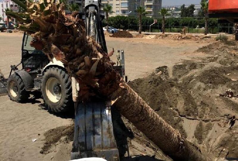 Palmiyelere hassas taşıma