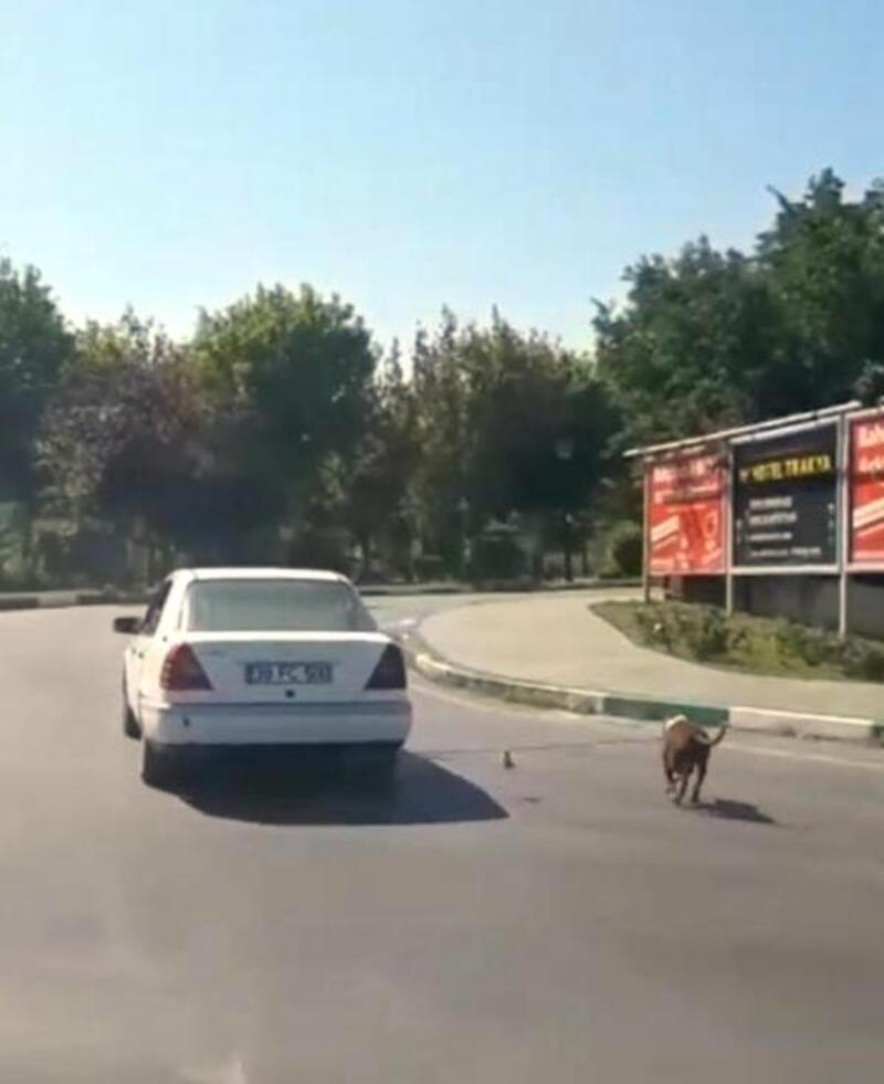 Köpeğini otomobilin arkasına bağlayarak götüren kişiye 773 TL ceza