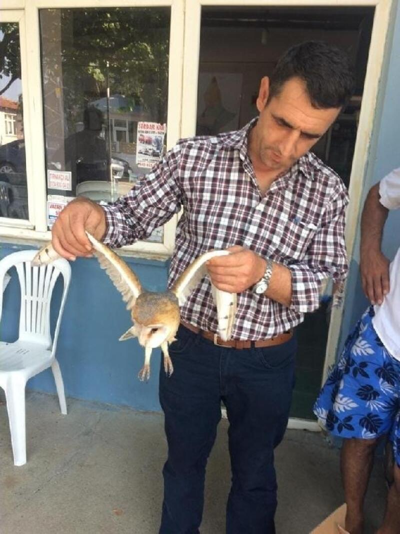 Yaralı halde bulunan peçeli baykuş, tedaviye alındı