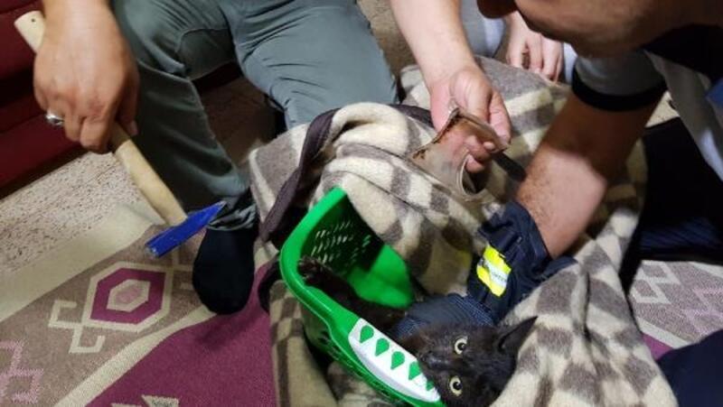 10 gündür boynunda kavanoz parçasıyla gezen kedi, kurtarıldı
