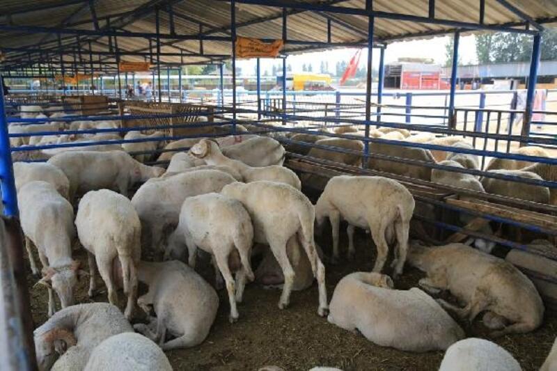 Nilüfer'de, Kurban Bayramı hazırlıkları tamamlandı