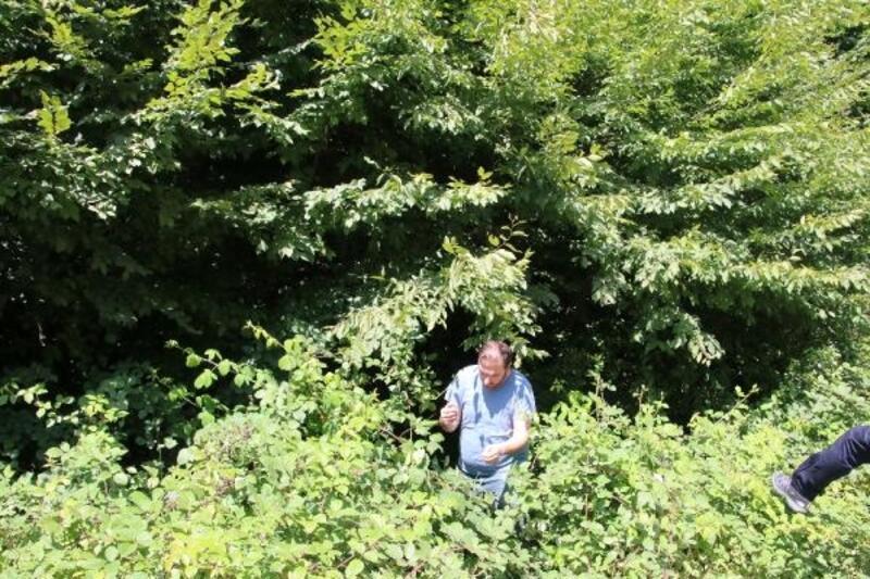 Fındık toplarken ormana yuvarlanan genci, AFAD kurtardı