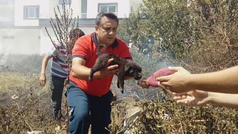Alevlerin arasında kalan yavru köpekler kurtarıldı