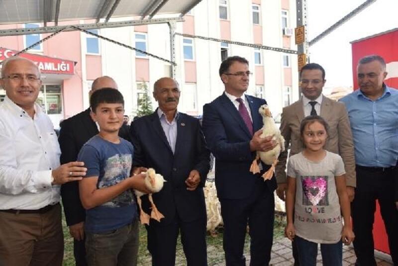 Tokat'ta çiftçilere 5 bin adet kaz dağıtıldı