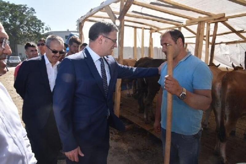 Tokat'tan Kurban Bayramı için 13 ile 21 bin hayvan gönderildi