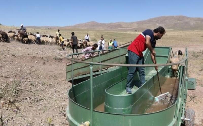Mobil koyun banyoluğu ile hayvanlar yıkanıp, ilaçlanıyor