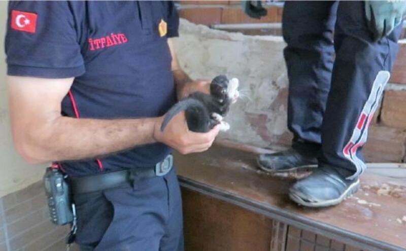 İki duvar arasına sıkışan yavru kediyi itfaiye kurtardı