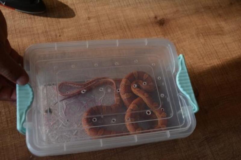 İnternet üzerinden yılan satarken yakalandı