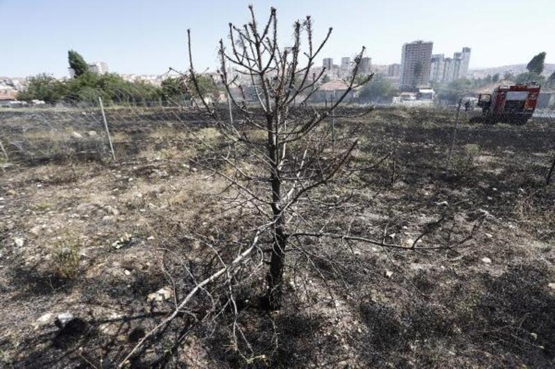 Ankara'da ot yangını korkuttu