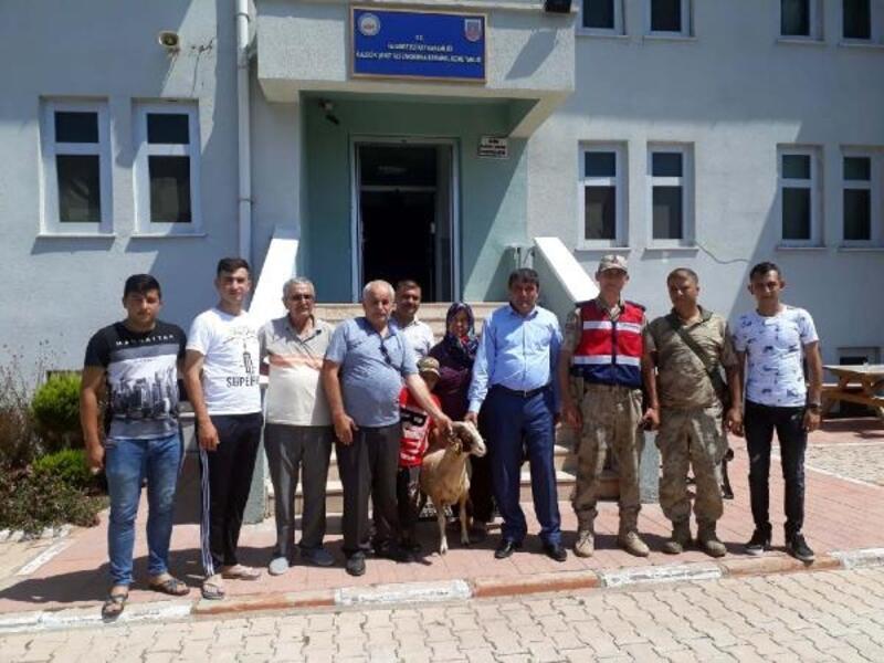 Şehit anne babası aldıkları 2 kurbanlık koçu Mehmetçiğe bağışladı
