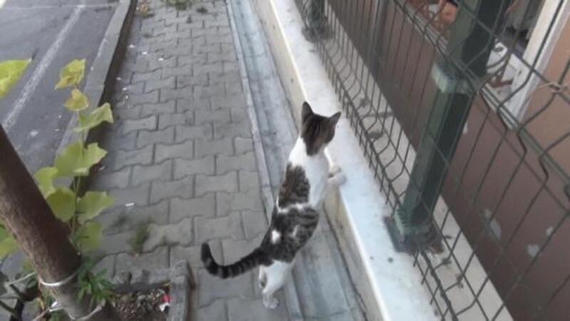 Apartman boşluğuna düşen yavru kedi için mahalleli seferber oldu