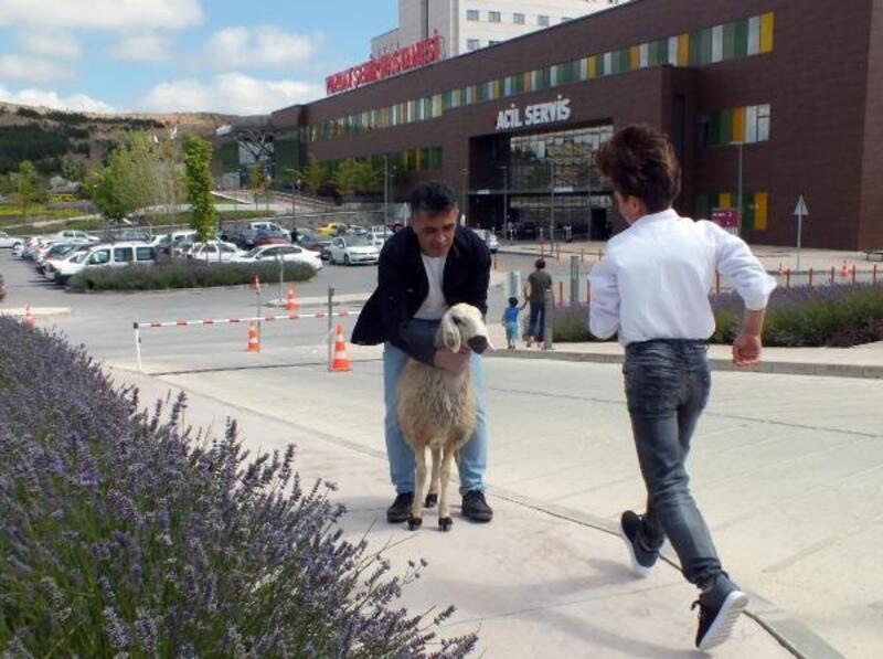Yozgat'ta kaçan kurbanlık, acil servis önünde yakalandı