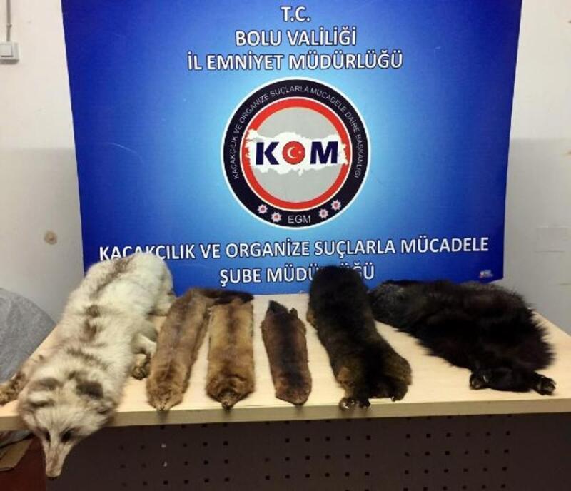 Bolu'da, yabani hayvan postu kaçakçılığı