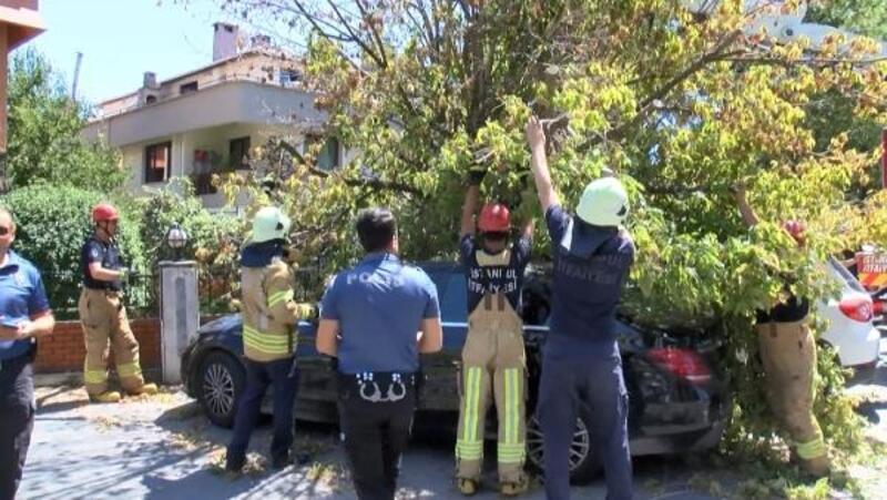 Florya'da park halindeki 3 aracın üzerine ağaç devrildi