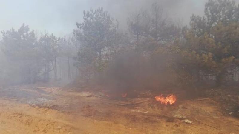 Gebze'de mesire alanındaki yangın, ağaçlara sıçradı