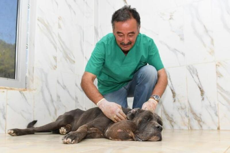 Sahibi tarafından terk edilen köpeğe şefkat eli