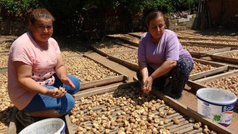 Aydınlı incir üreticilerinin yüzü güldü