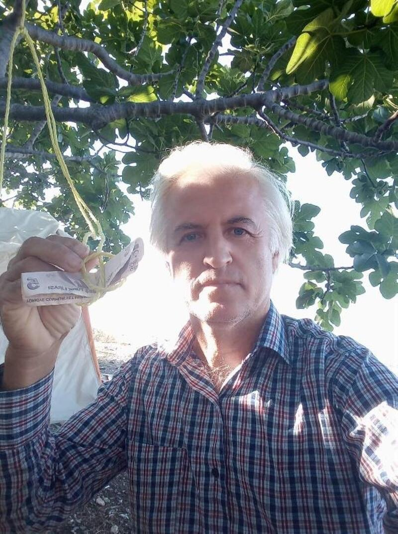 Kopardığı meyve için ağaca para astı