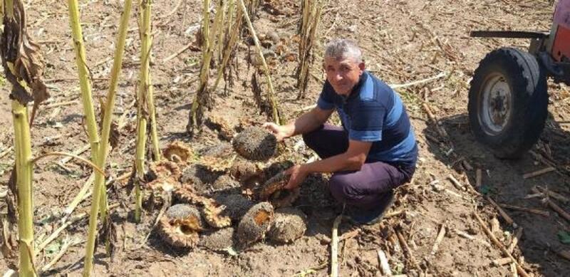 Aksaray'da dolu, bin hektar alana zarar verdi