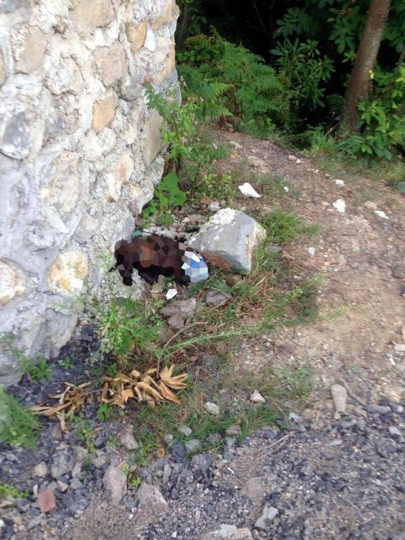 Zonguldak'ta sokak köpeğine işkence iddiası