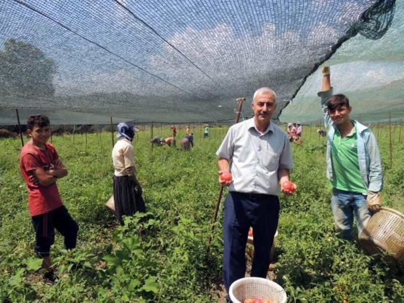 Bahçe'de sebzeciliği geliştirme projesi meyvelerini veriyor