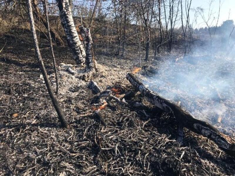 Kırklareli ve Hayrabolu'da orman yangını