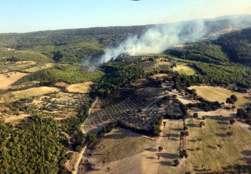 Bergama'da orman yangını