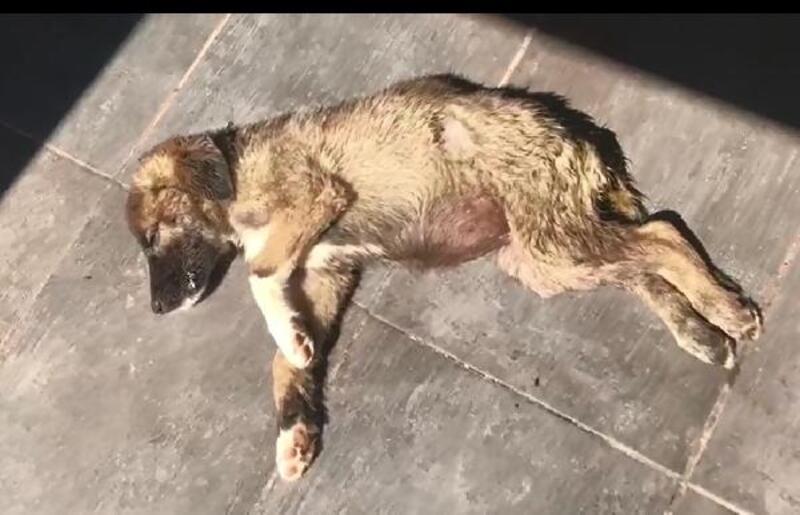 Hayvanları ölüme terk eden barınak çalışanlarına soruşturma