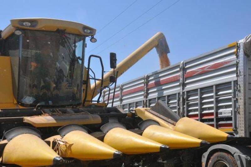 Reyhanlı'da mısır hasadı başladı