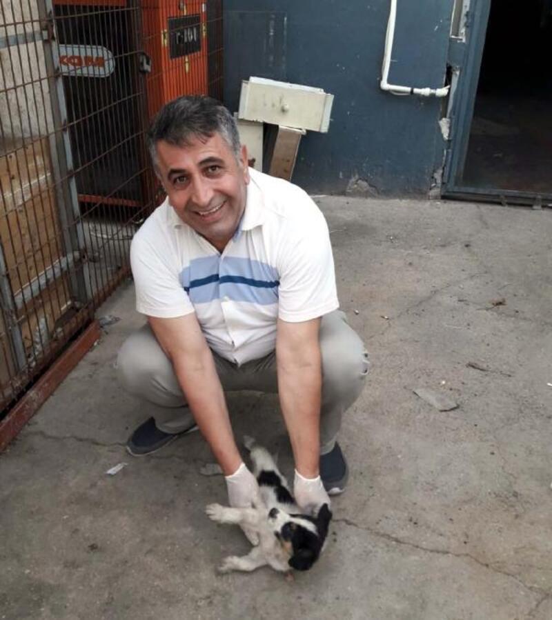 Hayvansever savcı Van'dan geldi, sokak hayvanrların yanına koştu