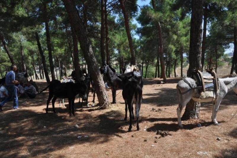 Bayramiç Panayırı'nda at ve eşekler satışa çıktı
