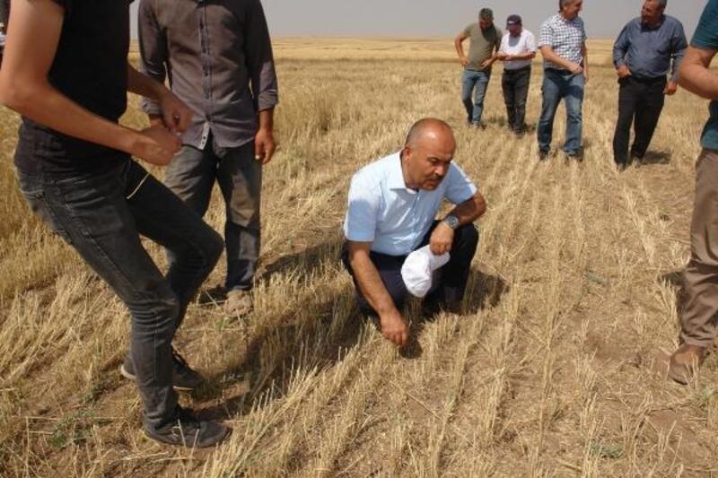 Sivas'ta toprak işlemesiz tarım yaygınlaşıyor