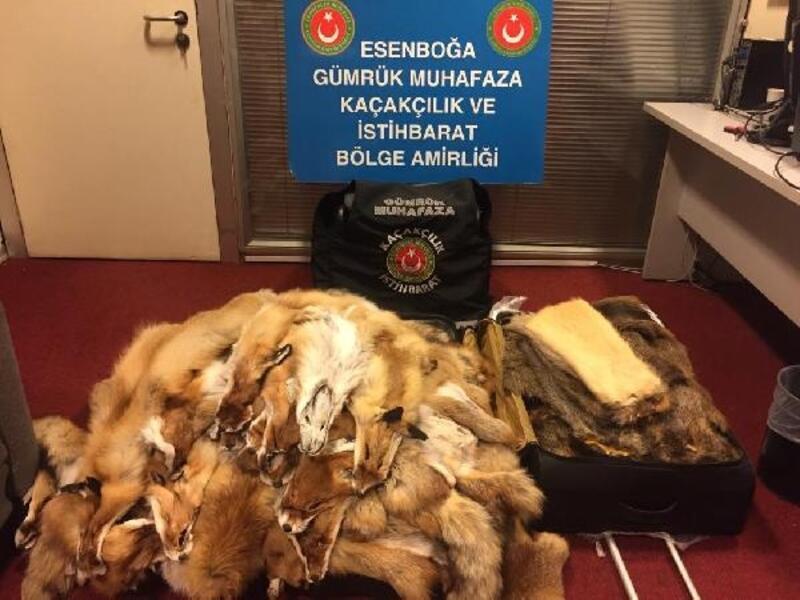 Esenboğa Havalimanı'nda kunduz ve tilki postları ele geçirildi