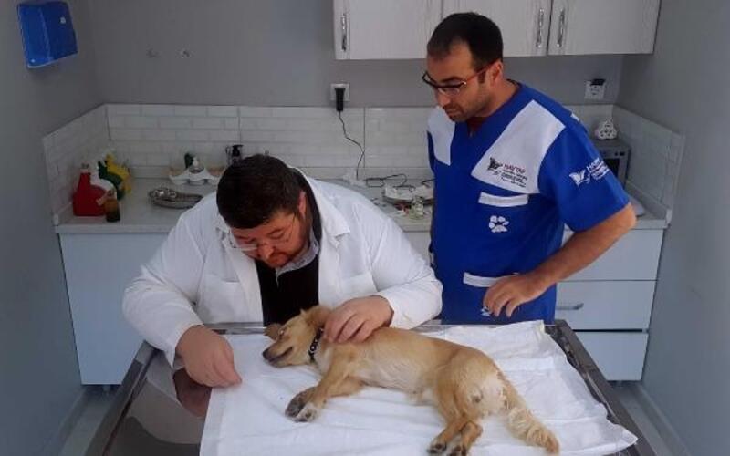 Köpeğe, 'göz yaşı bezi' ameliyatı