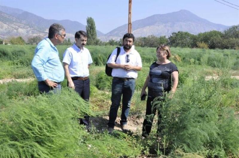 Tarım ve Orman Müdürü Sever, Sarıcakaya'da kuşkonmaz tesislerini gezdi