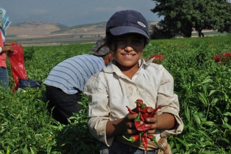 Gaziantep'te biber hasadına başladı