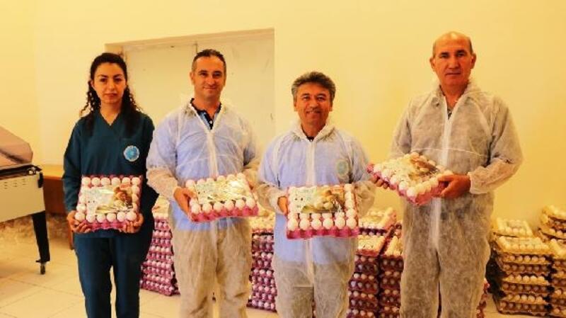 Üniversitede günde 8 bin yumurta üretiliyor