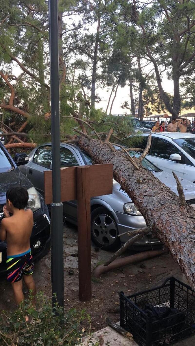 Çam ağacı devrildi 3 otomobil zarar gördü