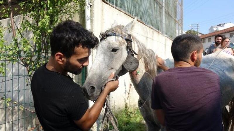 Yorgunluktan yere yığılan atın yardımına jokey kardeşler yetişti