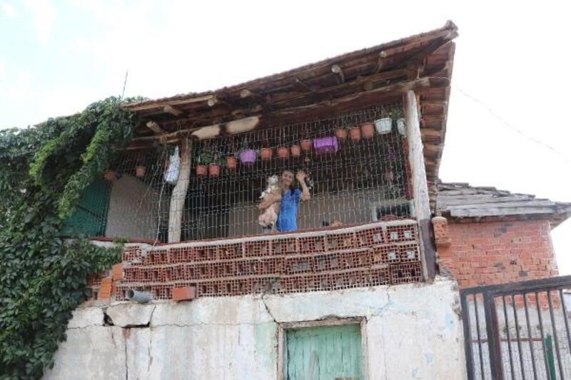 3 aylık bebeği ölünce, evini sokak hayvanlarına açtı