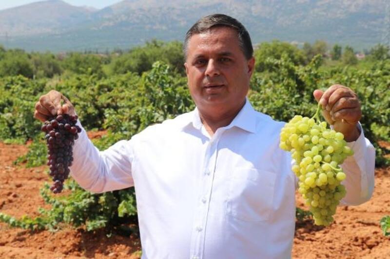 Türkiye'nin şaraplık üzüm deposunda, fiyat artışı için güç birliği